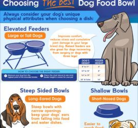 dog food bowl choose right one your dog tips tipsographic thumbnail