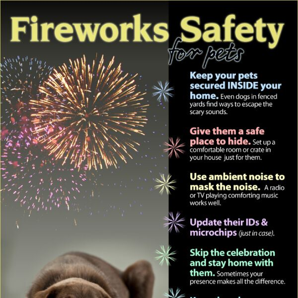 Pets Fireworks Safety Tips Tipsographic