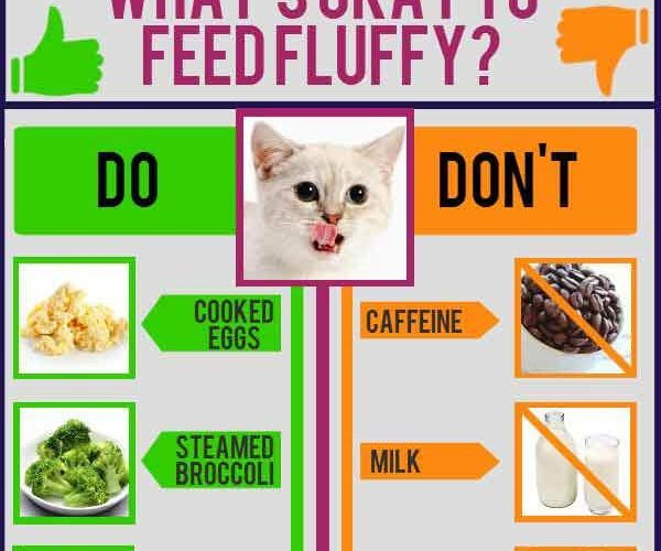 cat nutrition tips human foods safe cats tips tipsographic