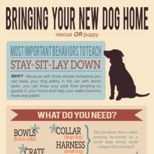 Tips To Bring Your New Dog Home Rescue Or Puppy