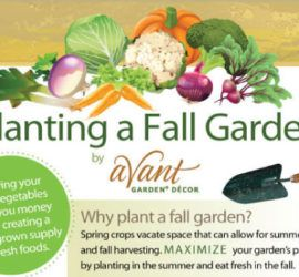 tips-to-plant-a-fall-garden-tips-tipsographic-thumb-1